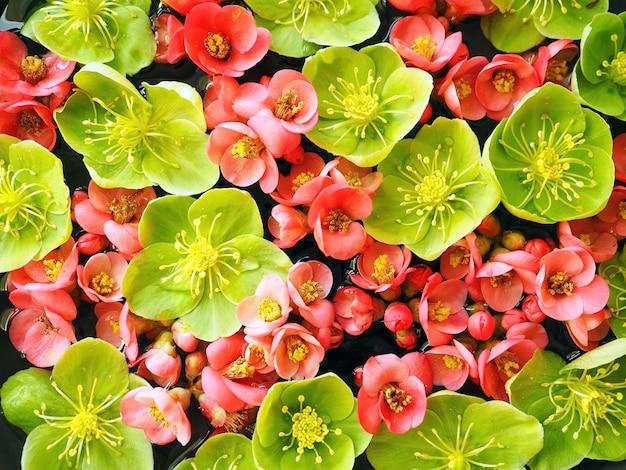 ピンクと緑の春の花の背景