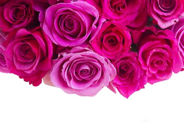 ピンクとマゼンタの新鮮なバラのボーダーが白い背景で隔離