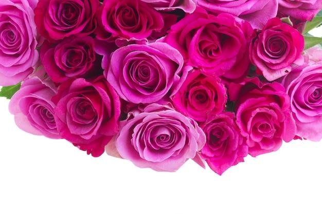 ピンクとマゼンタの新鮮なバラのつぼみの境界線は、白い背景で隔離