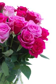 ピンクとマゼンタのバラのクローズアップは白い背景で隔離