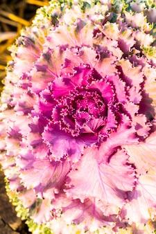 ピンクと紫の色の花