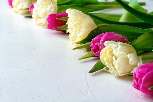 明るい背景に水滴とピンクとテリーの明るい黄色のチューリップ