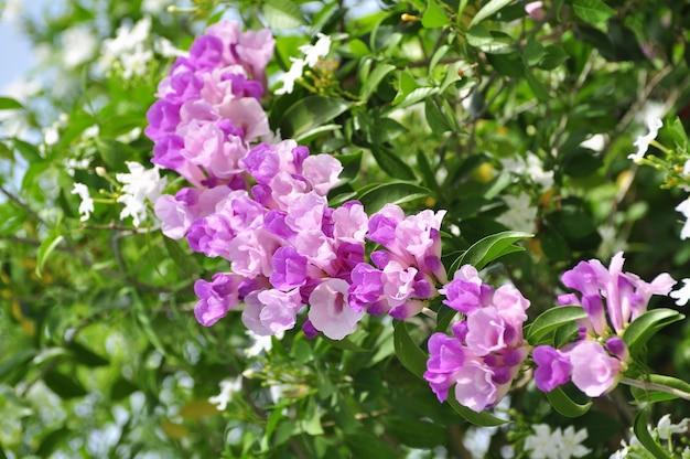 분홍색과 보라색 꽃 곤충과 꿀벌 빨아