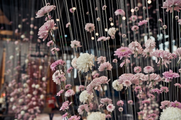 Розовые и белые хризантемы висят на потолках с потолка