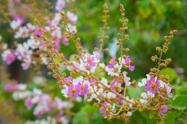 ボケ背景のピンクと白の花