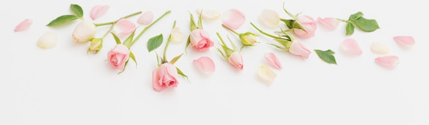 흰 종이 바탕에 분홍색과 흰색 꽃