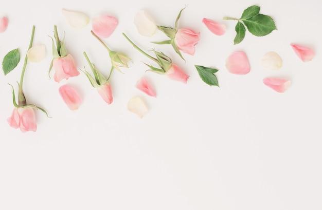 Розовые и белые цветы на фоне белой бумаги