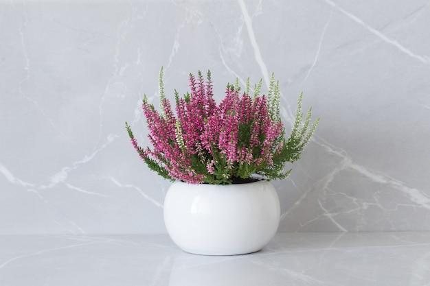 Розовый и белый вереск в цветочном горшке на сером мраморном фоне