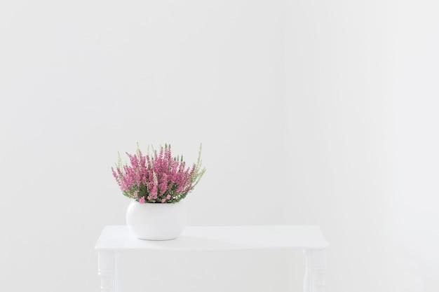 Розовый и белый вереск в цветочном горшке на белом фоне