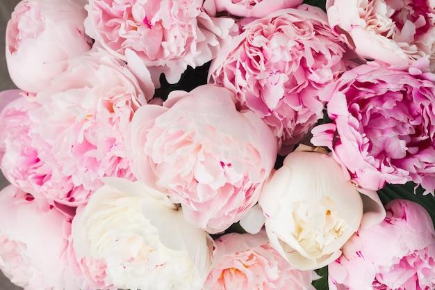 Розовые и белые цветы пионов