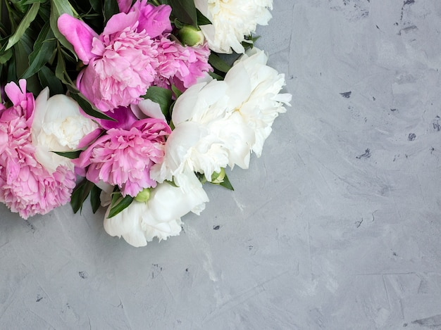 회색 돌 배경에 분홍색과 흰색 모란, 텍스트 평면도 및 평면 평신도 스타일 복사 공간.