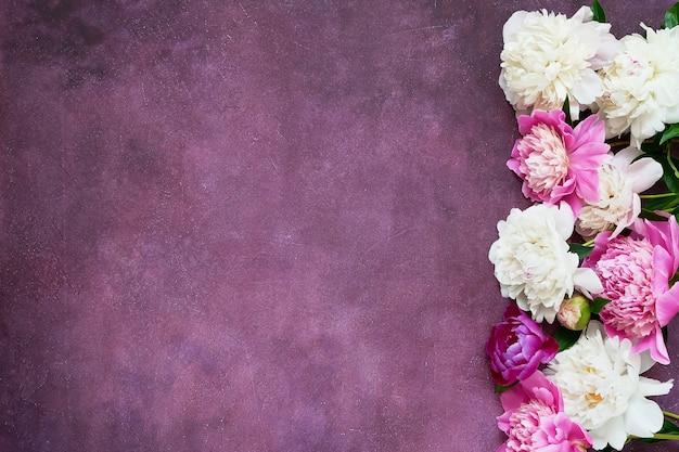 Розовые и белые пионы на фиолетовом фоне. планировка для приглашений, поздравлений. открытка. копирование пространства, вид сверху.