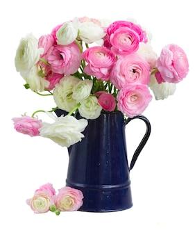 Розовые и белые цветы лютик в синем горшке, изолированные на белом фоне