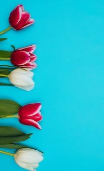 ピンクと白のチューリップが青い背景に一列に並んでいます。 3月8日の休日の概念。バレンタインデー。グリーティングカード。ジューシーな緑の葉。
