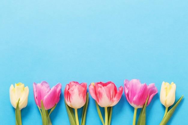 블루 종이 바탕에 분홍색과 노란색 튤립
