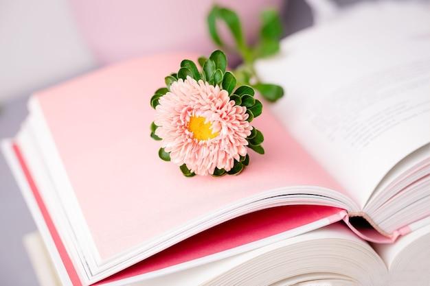 開いた本のピンクの秋のアスターの花