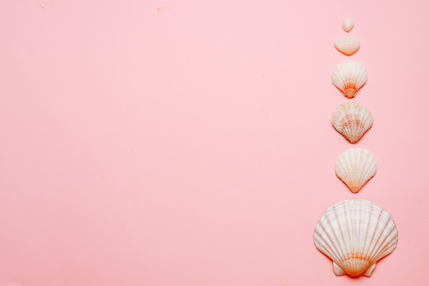 On a pink background laid out seashells