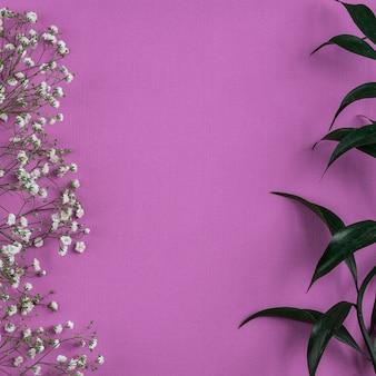 분홍색 배경입니다. 흰색 녹색 꽃.