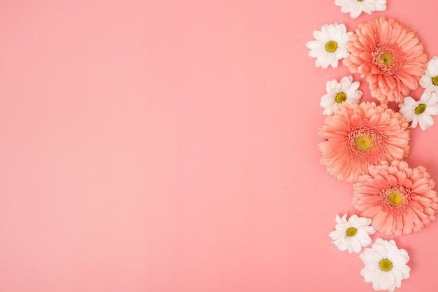 Pink background with daisies and gerbera flowers