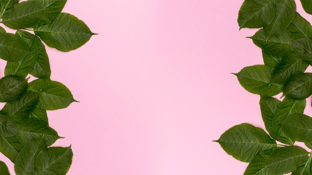 Pink background with decorative botanical leaves