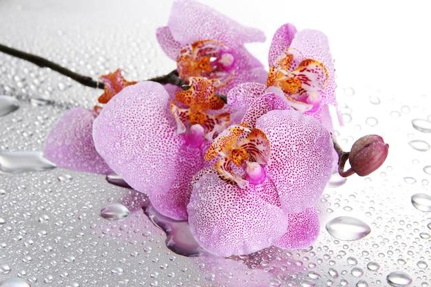 Розовые красивые орхидеи с каплями