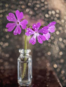 ピンクの美しいサクラソウの花のアート写真。閉じる。