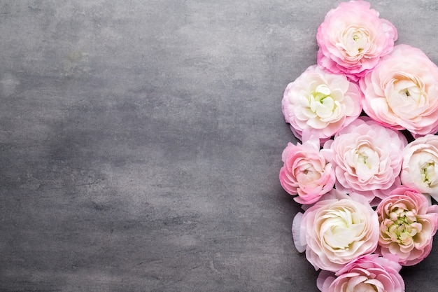 Pink beautiful ranunculus on gray background