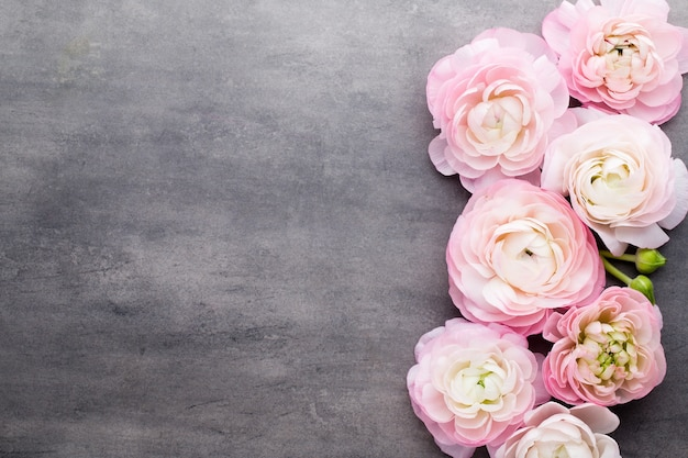 Pink beautiful ranunculus on gray background