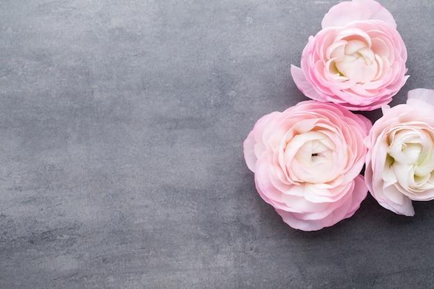 灰色の背景にピンクの美しいラナンキュラス。