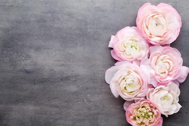 灰色の背景にピンクの美しいラナンキュラス