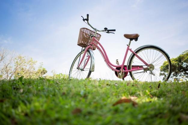 公園でピンクの自転車