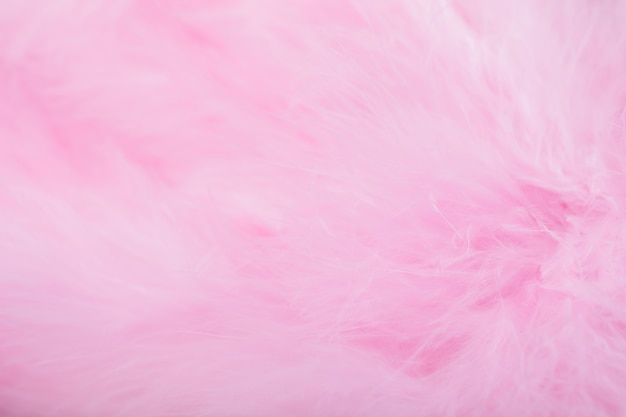 Pink bird feathers in soft and blur style, fluffy pink feather background