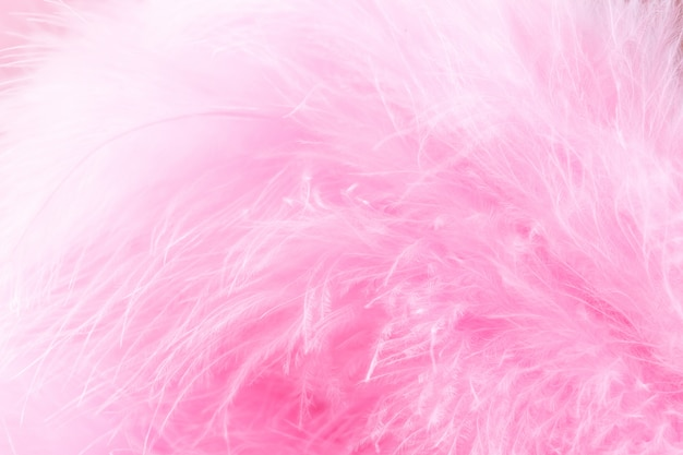 Pink bird feathers in soft and blur style