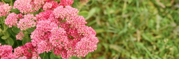 庭に咲くピンクの花