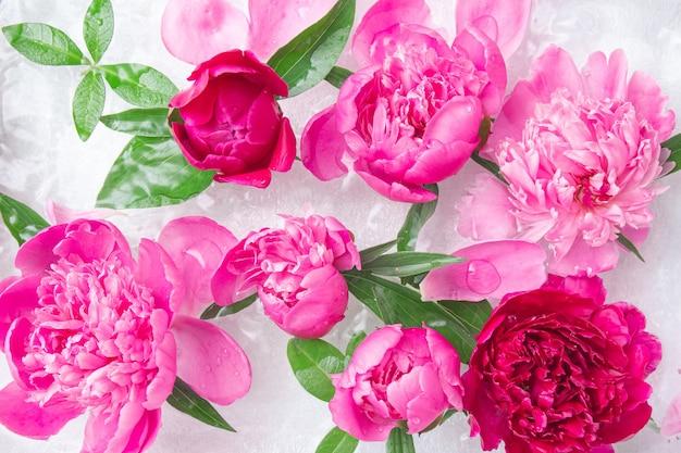 Розовые цветущие пионы, лепестки и зеленые листья в воде на белой поверхности