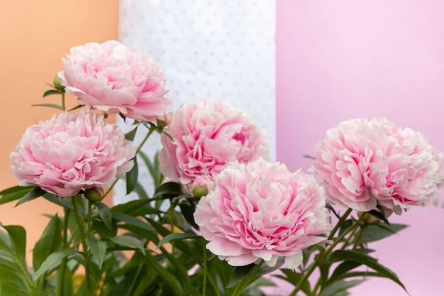 Розовый цветущий цветок пиона на свете