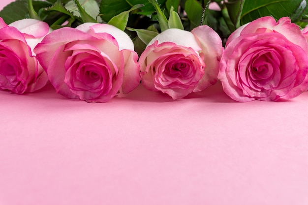 Pink blooming roses on pastel pink. romantic floral frame. copy space