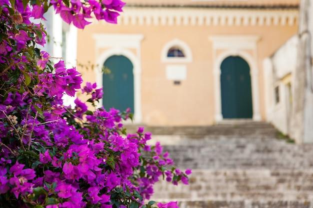 배경에 오래 된 집과 핑크 꽃 꽃입니다. 화창한 날과 휴가 개념입니다. 코르푸 그리스 고대 도시. 장식된 건물, 지중해 기후 식물 및 건축물