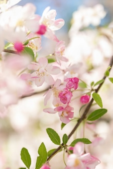 Pink blossom tree branch. blurred background. close up, selective focus.