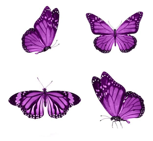 핑크 나비 흰색 배경에 고립입니다. 열대 나방. 디자인에 대 한 곤충입니다. 수채화 물감
