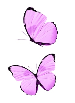 白い背景で隔離のピンクの蝶。熱帯の蛾。デザインのための昆虫。水彩絵の具