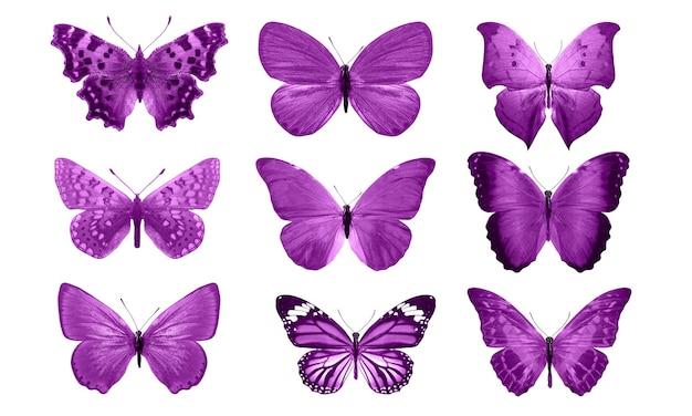 白い背景に分離されたピンクの蝶。熱帯の蛾