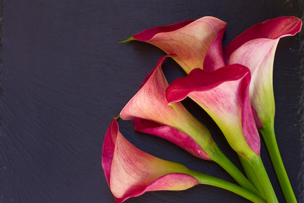 Pink calla lilly flowers