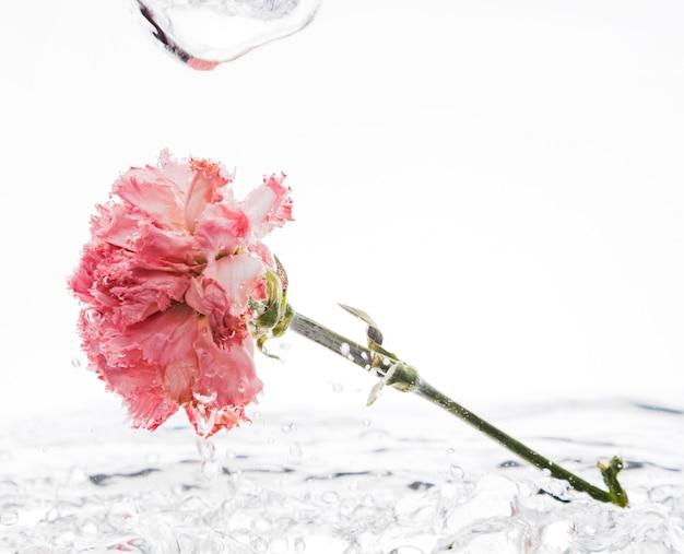 Garofano rosa che cade nell'acqua
