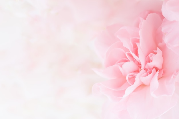 Pink carnation flowers bouquet.