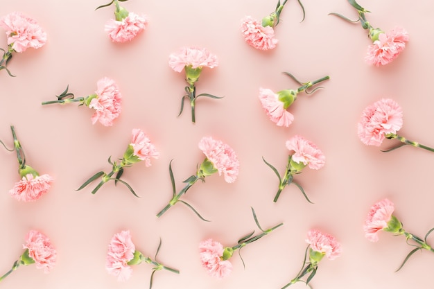 Pink carnation flowers on pastel background. flat lay, top view.