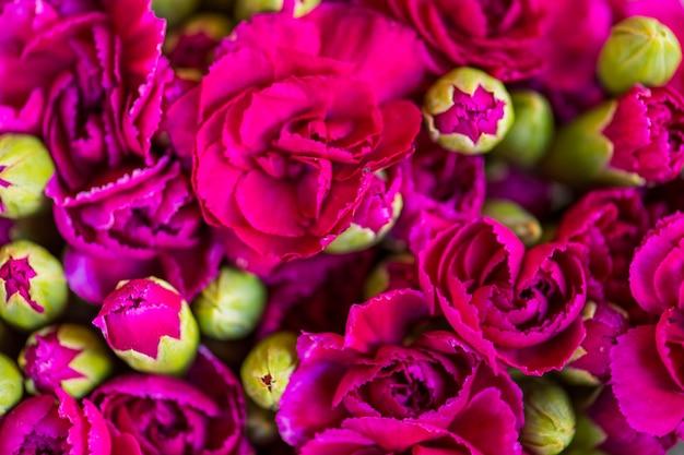 Pink carnation flowers textured background