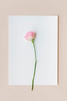 白い紙にピンクのカーネーション