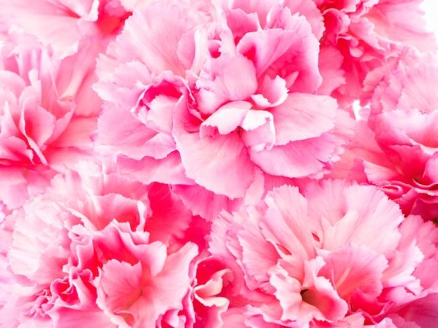 母の日のピンクのカーネーションの花