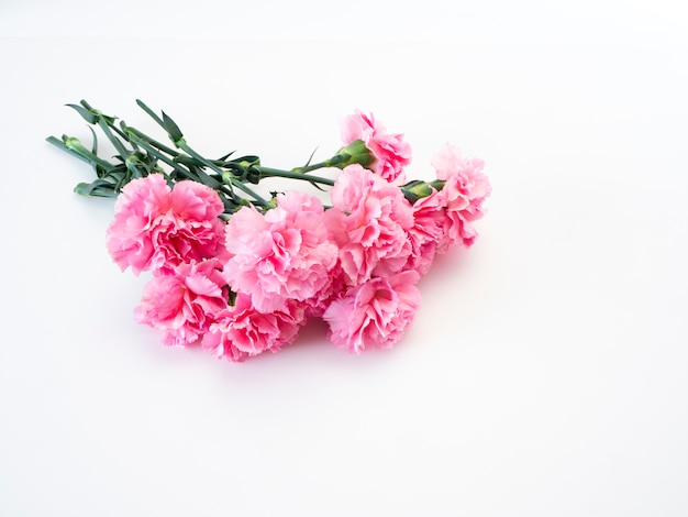 Pink carnations flower for mother's day